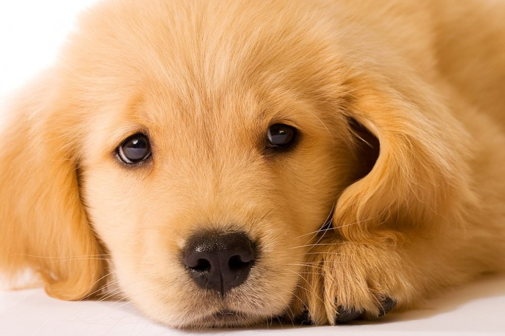 sad_dog-nrz00skf6yp9atl196bt1g8cng5xii68l9jt2e7xvs